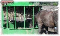 Testimonial of our hay hopper horse feeder